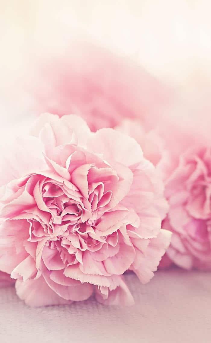pink wallpapers for iphone desktop