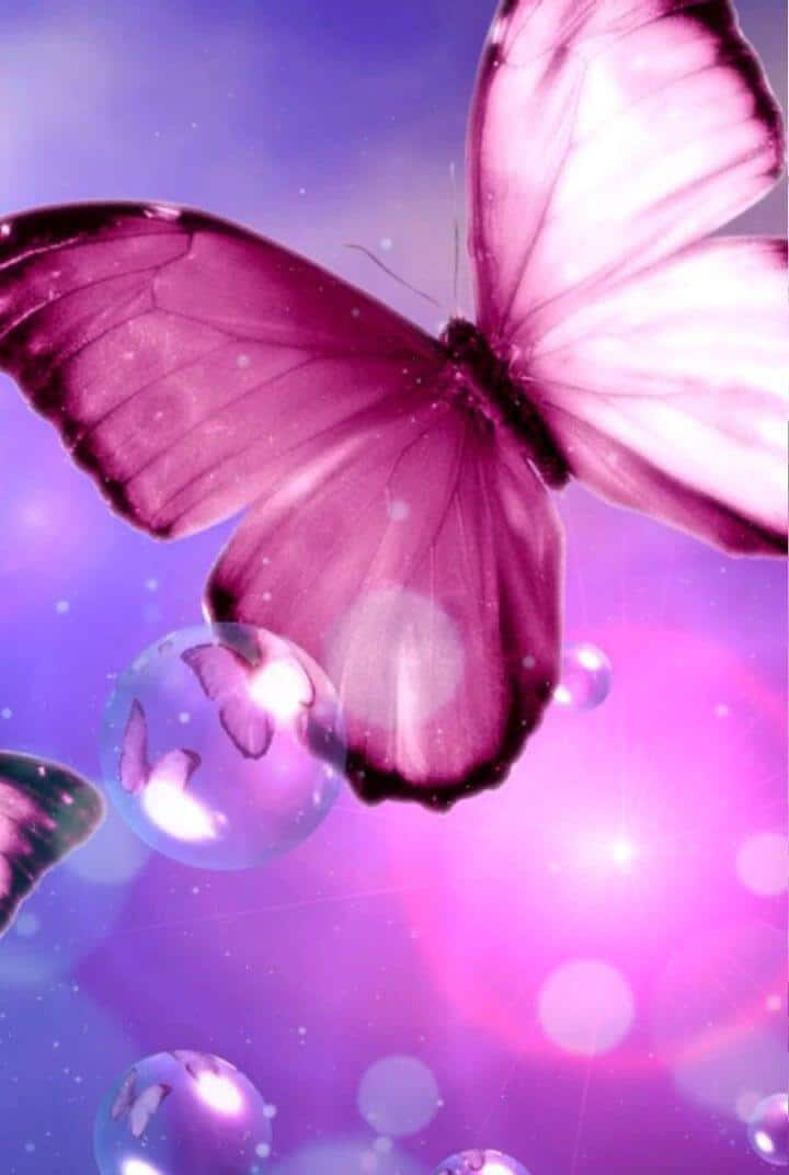 Pink butterfly wallpapers background
