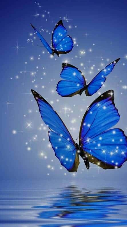 Blue butterfly wallpaper and wallpapers.