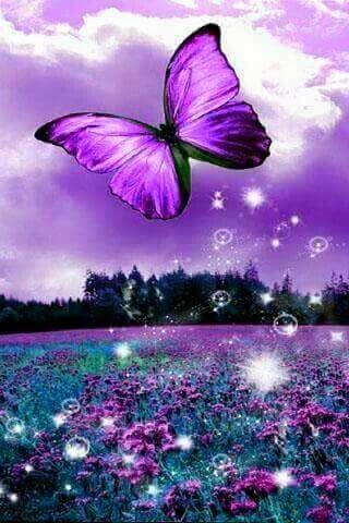 Purple Beautiful butterfly wallpapers.